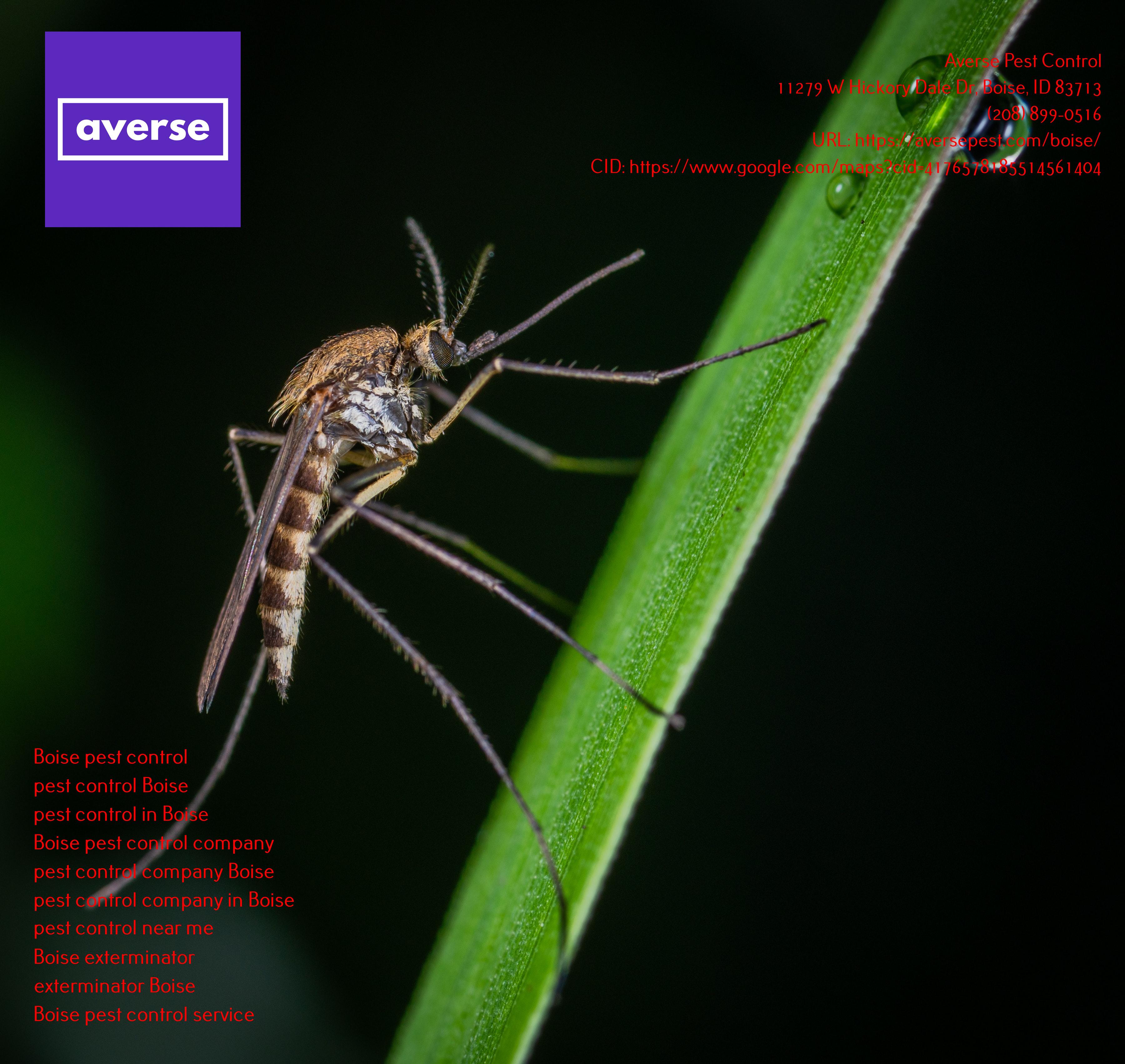 Averse Pest Control Attains Google Guaranteed Status